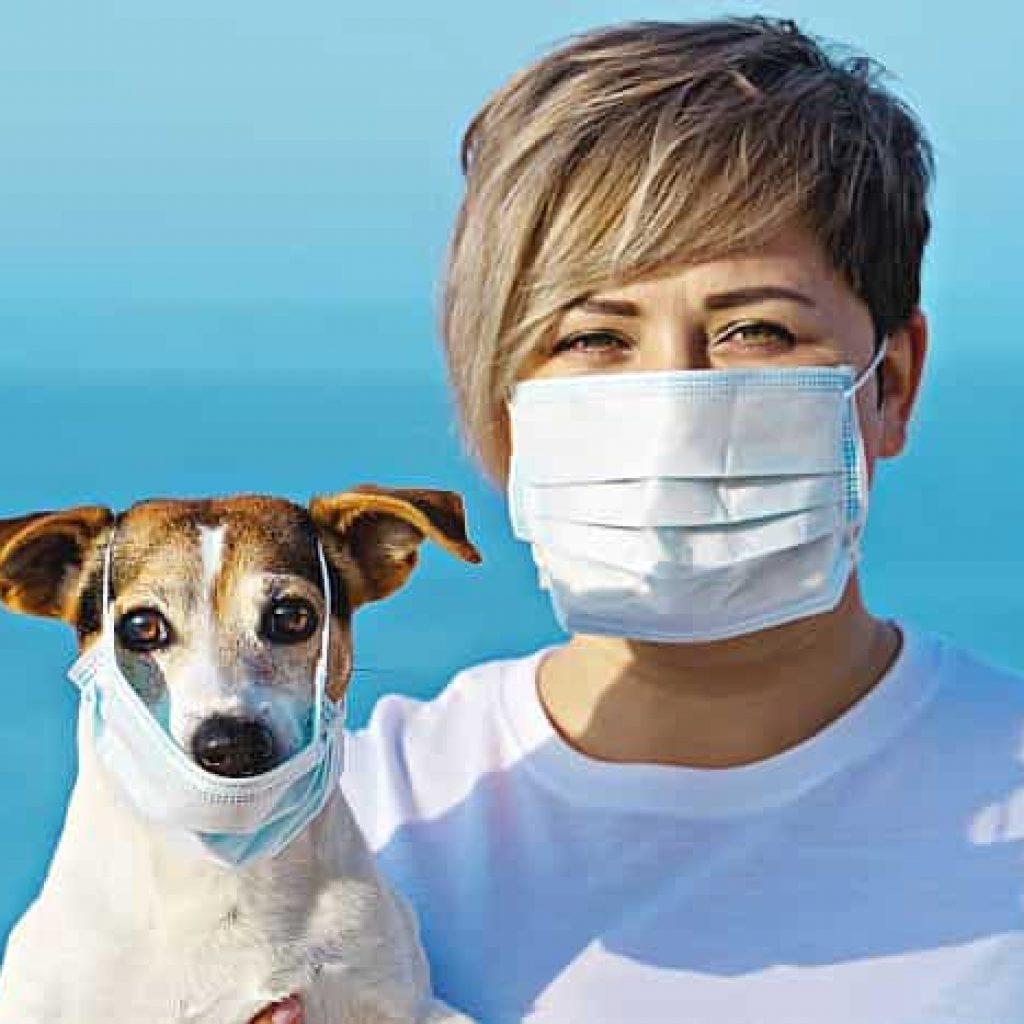Can Corona virus affect your Dog