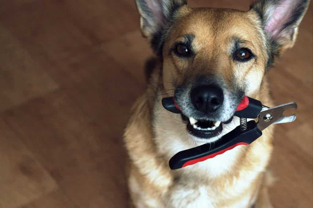 how to trim your dog's nail at home-min