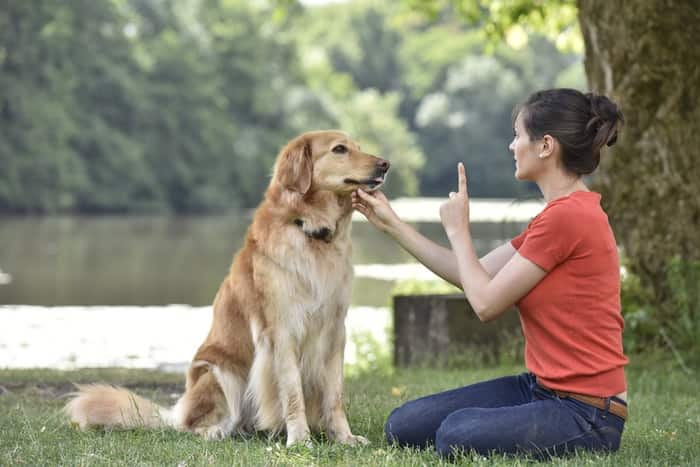 5 Strategies to Help Your Dog, Live a Longer Happier Life