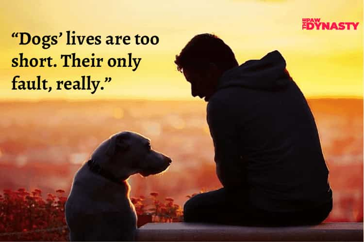 """""""Dogs' lives are too short. Their only fault, really."""""""