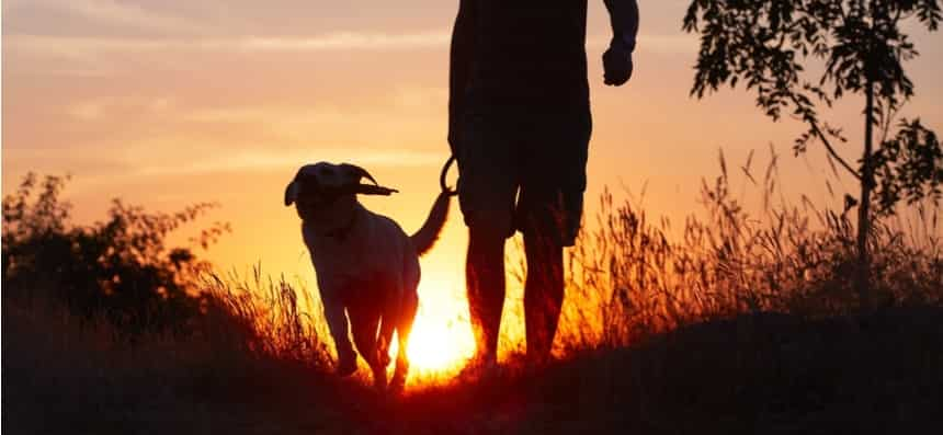 Dogs make folks feel great, and their sole job is to aid individuals in stressful situations sense better.