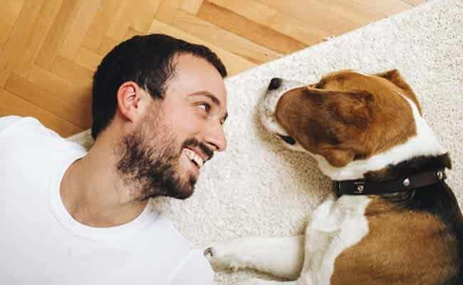 How dogs Promote your health and Joys
