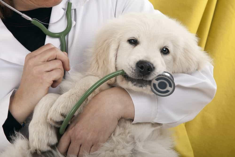 Regular dog checkup
