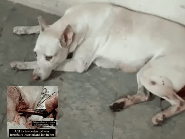 She Had Been at a pool of blood Female Dog struggles for life Following brutal sexual assault at Mumbai