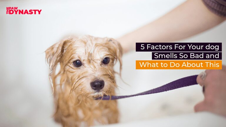 5 Factors For Your dog Smells So Bad and What to Do About This