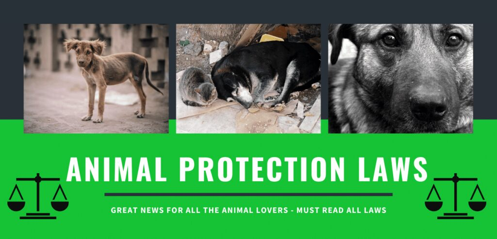 ANIMAL PROTECTION LAWS