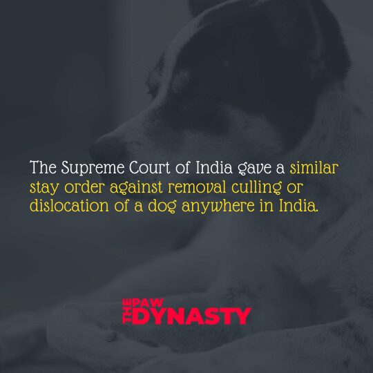 Animal Protection Laws, Superme Court of India
