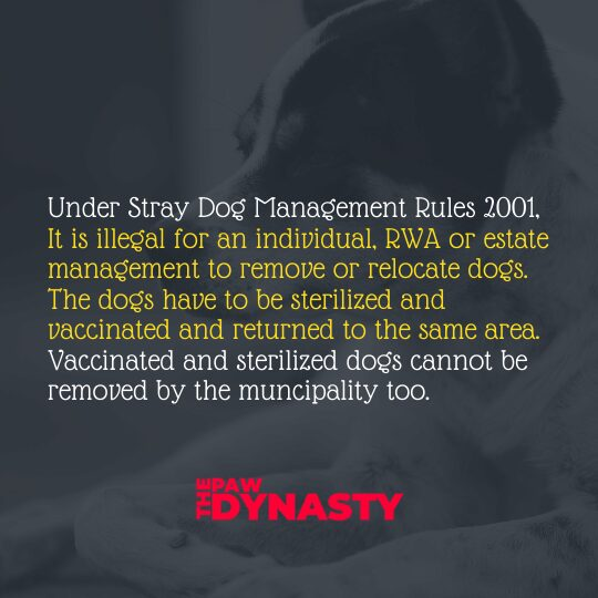 Animal Protection Laws, Under Stray Dog Management Rules 2001