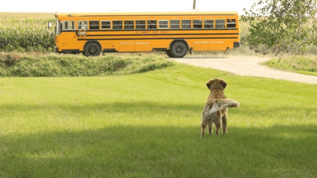 Dog rides bus every day to Perform in Neighborhood park - then Chooses bus home