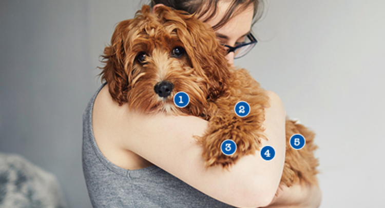 What You Should Know About Dog Health