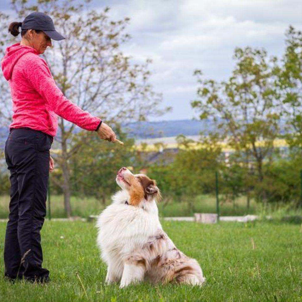 Expert Tips To Make Dog Training Easier