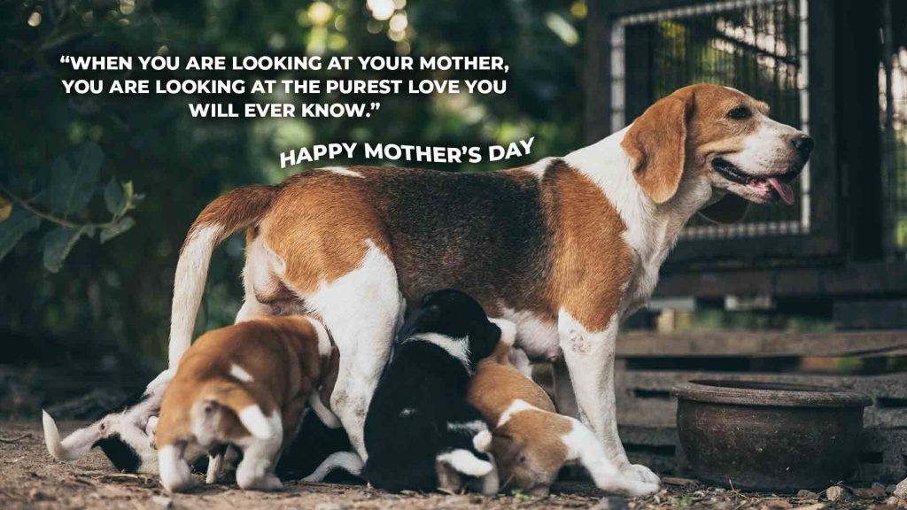 """""""When you are looking at your mother, you are looking at the purest love you will ever know."""""""