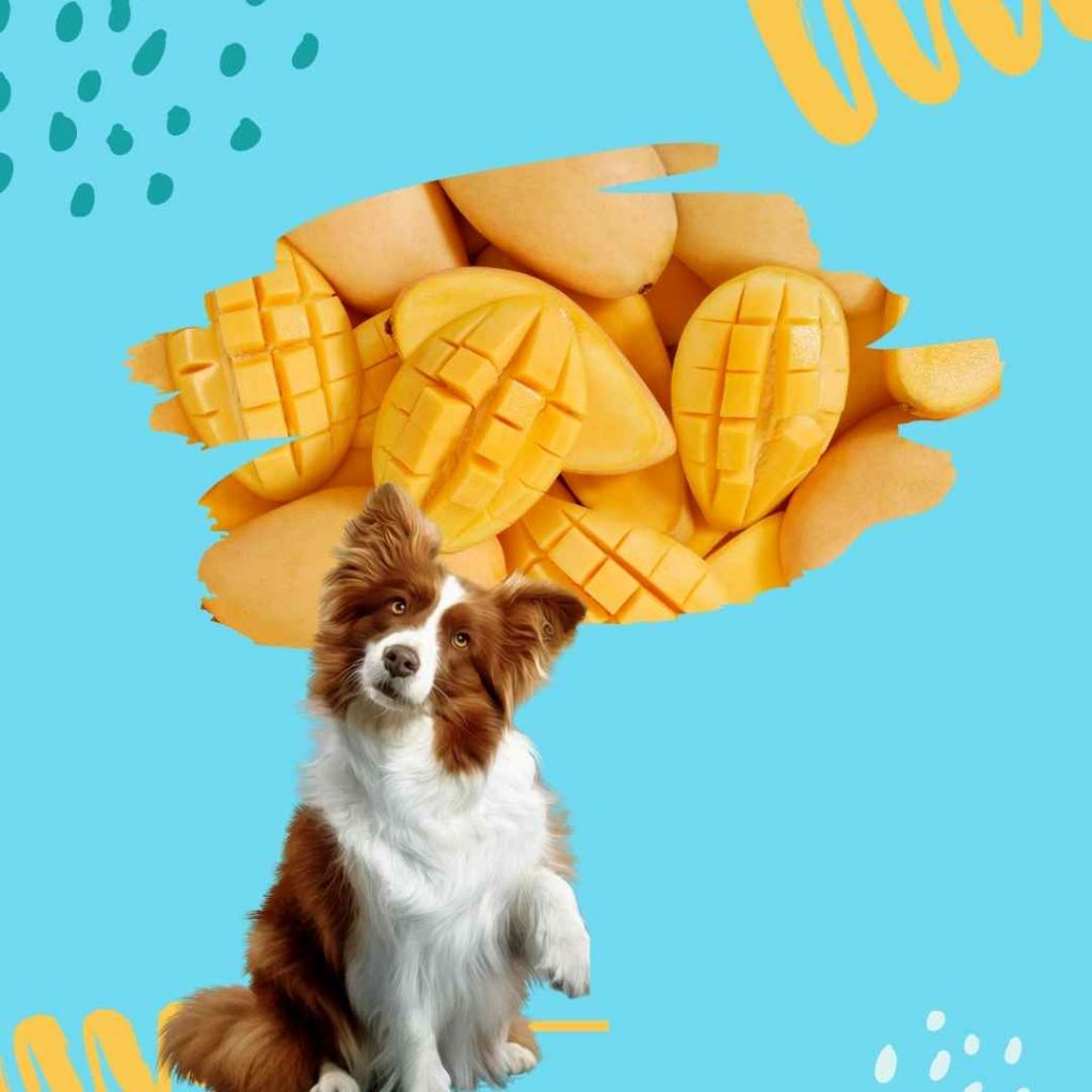 Can dogs have mangoes