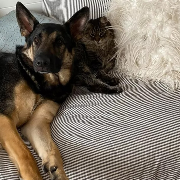 Smart dog saves Daddy's life from heart attack by alerting Spouse