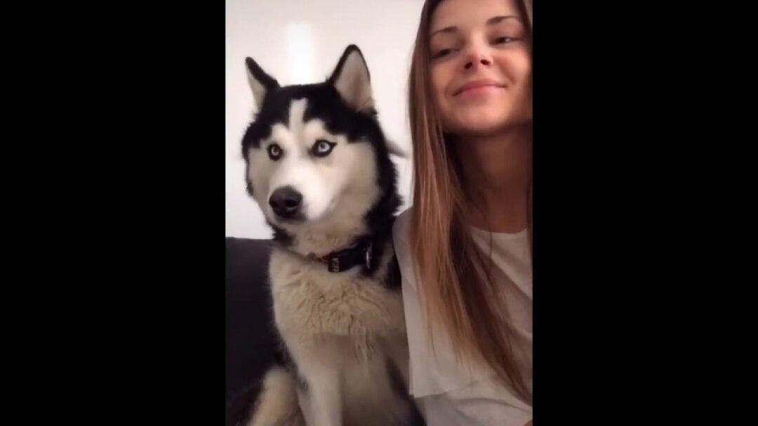 Dog Funny Video - Dog playing with their owner's Funny video 2020