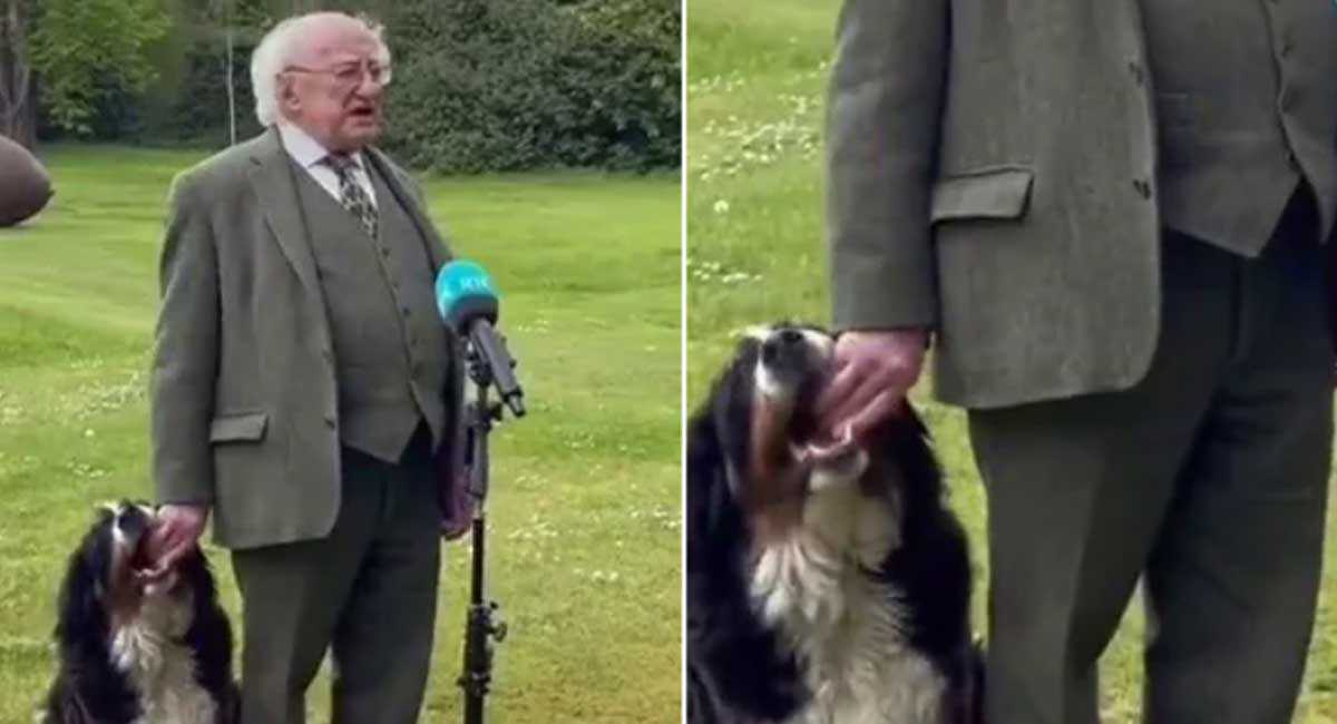 Dog Steals The Show