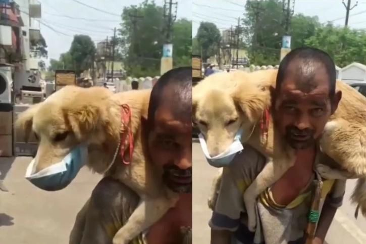 Viral Video Of Underprivileged Man Placing His Just Mask On Your Own Dog Is Wholesome