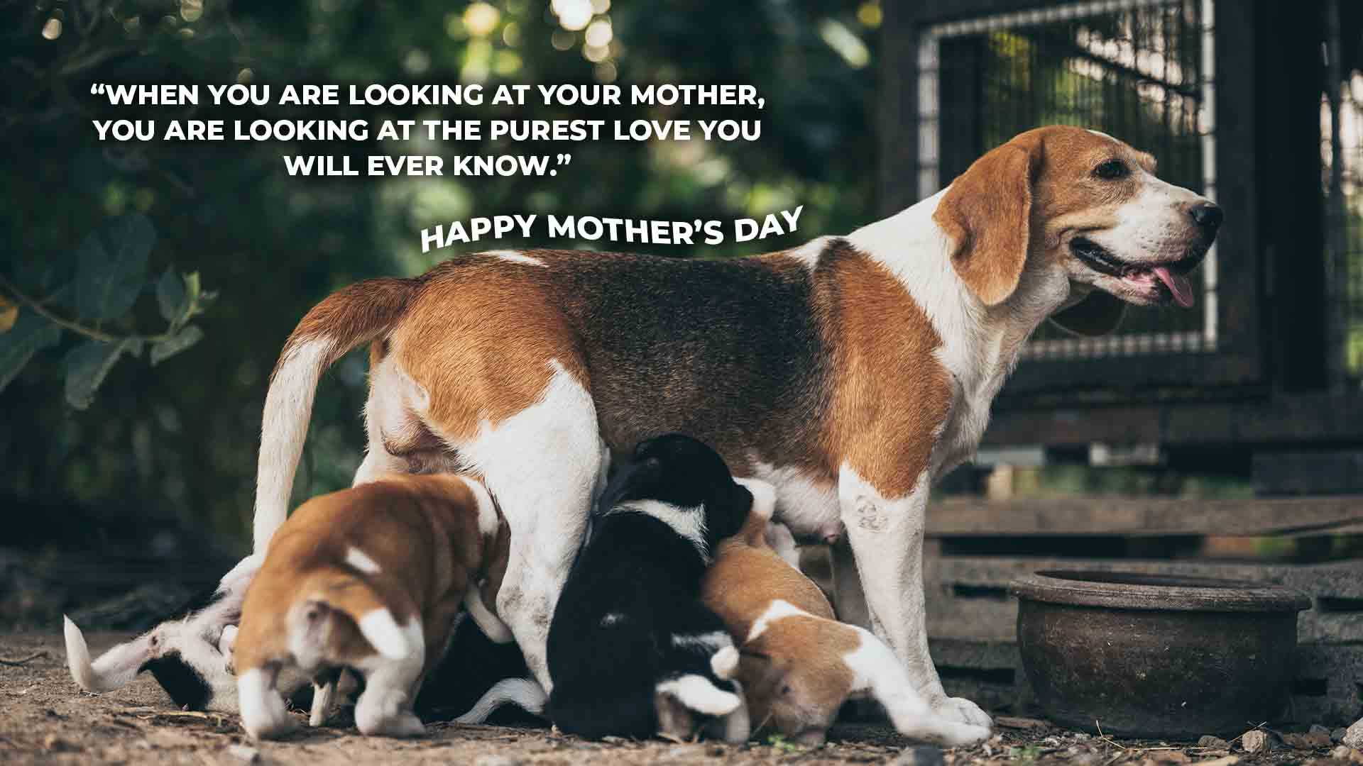 """When you are looking at your mother, you are looking at the purest love you will ever know."""