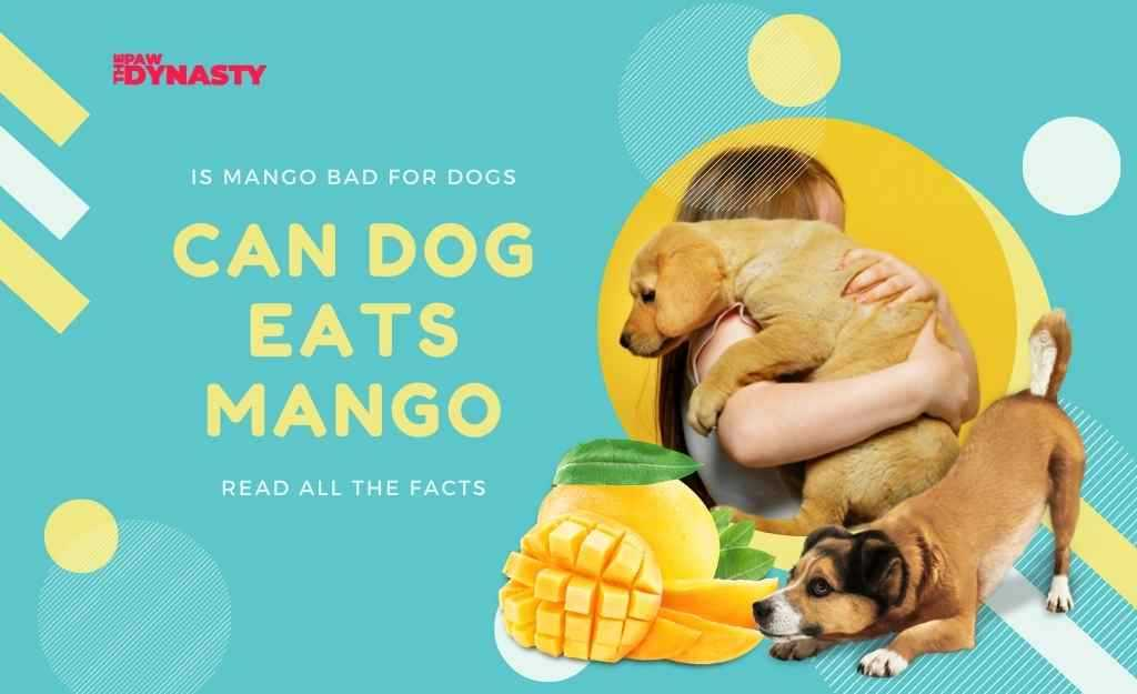 Can dogs eat mango
