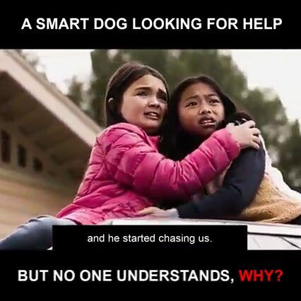 A Smart Dog Looking For Help, But No One Understands Why?